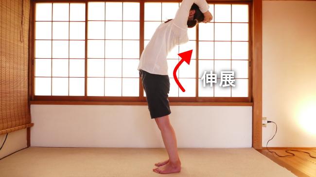 胸最長筋の腰椎の伸展