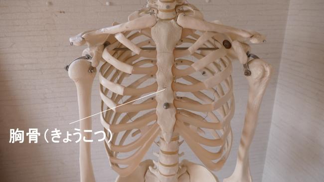 胸椎の前の胸骨