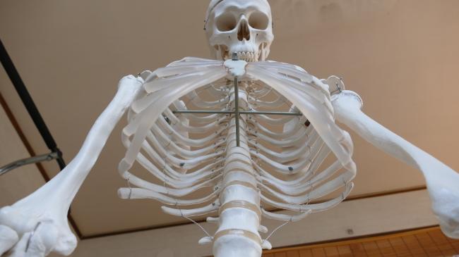 胸郭内部の胸椎