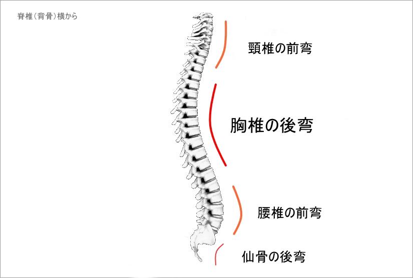 頸椎の前弯