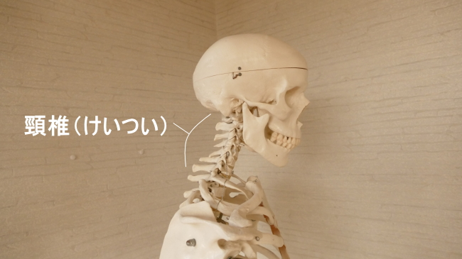 横から見た頸椎