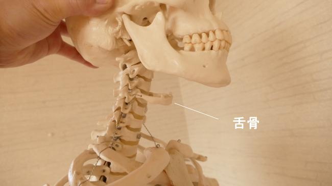 頸椎の前の骨