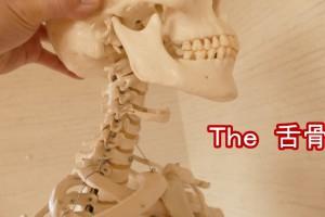 舌骨の解説