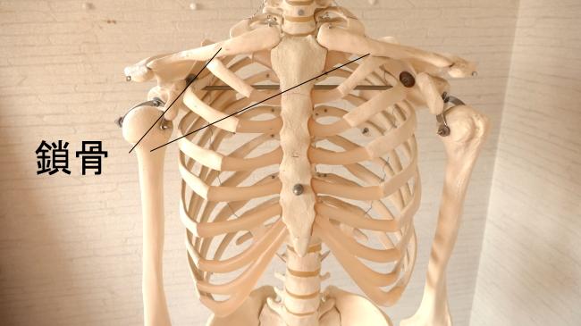 前方から見た鎖骨