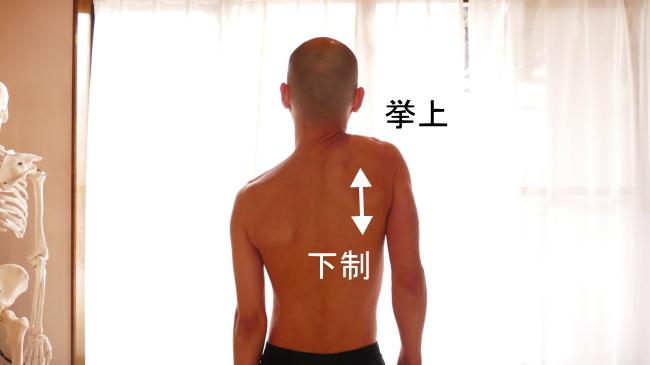 肩甲帯の挙上と下制