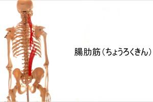 腸肋筋ストレッチ