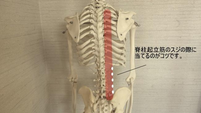 脊柱起立筋の圧す場所