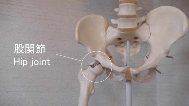 股関節の場所
