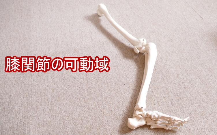 膝の可動域