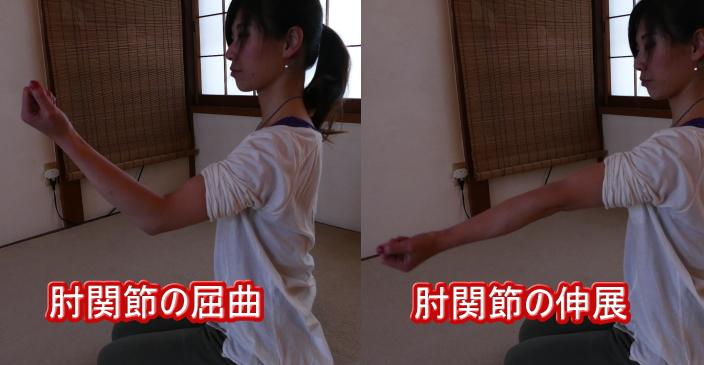 肘関節の屈曲と伸展