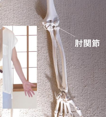 尺骨と上腕骨の関節