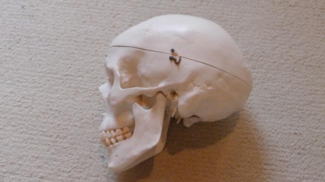 頭の骨の数
