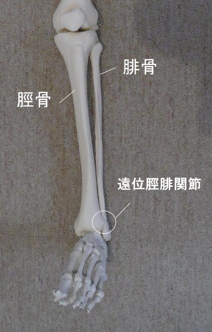 半関節の種類