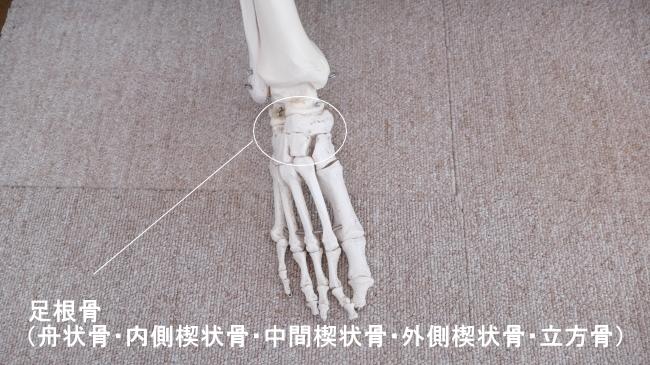 骨の種類、短骨