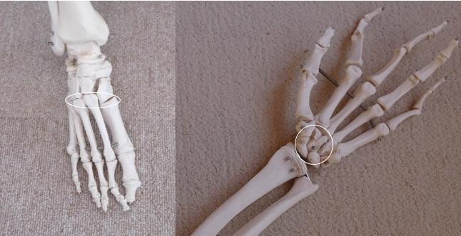 可動関節の種類、滑走関節