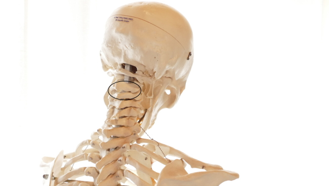可動関節の種類、車軸関節