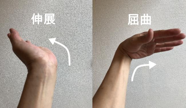 手首の動き、伸展と屈曲