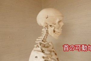首の可動域