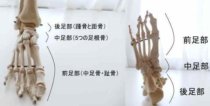 足の骨の分類