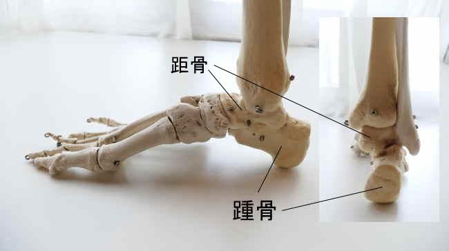 後足部の骨