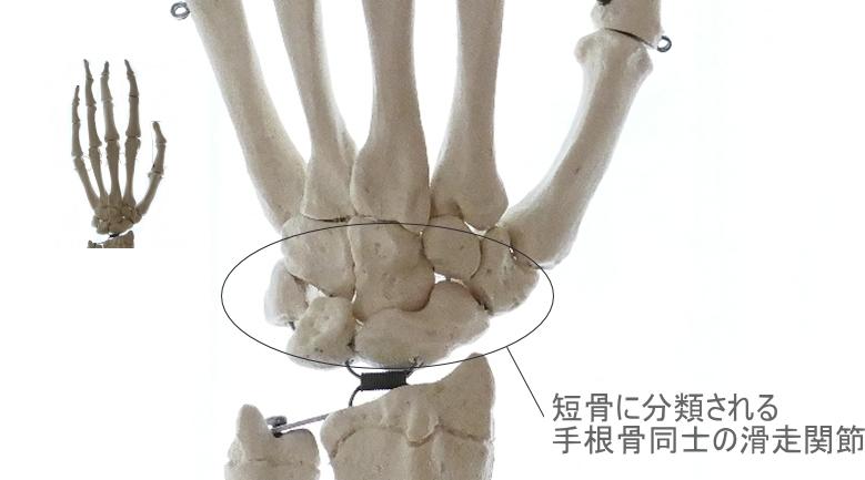 滑走関節の構造