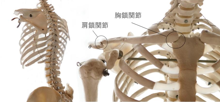 人体の滑走関節