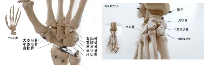 手足の滑走関節