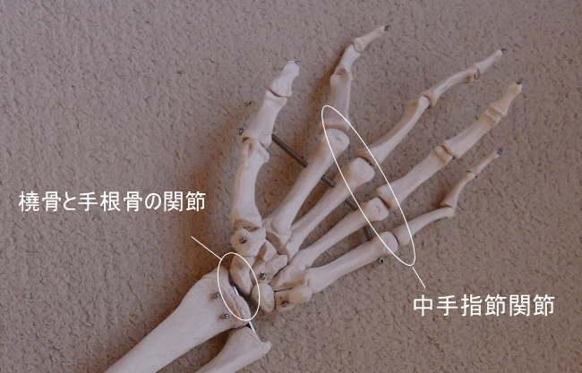 手の顆状関節